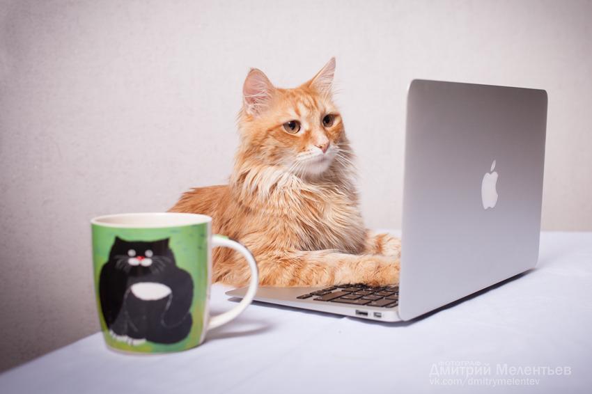 Cat Jobs
