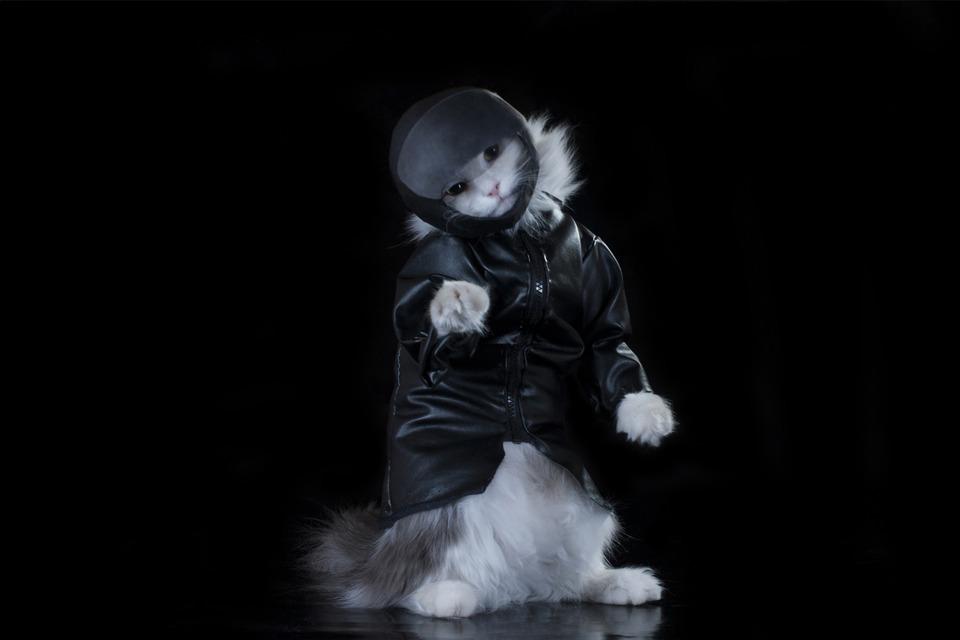 Rapper cat