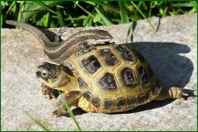 Tortoise and snake
