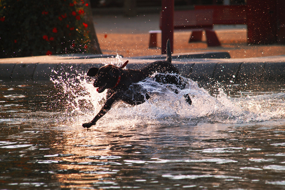 Dog swimming | swim, dog, river, water
