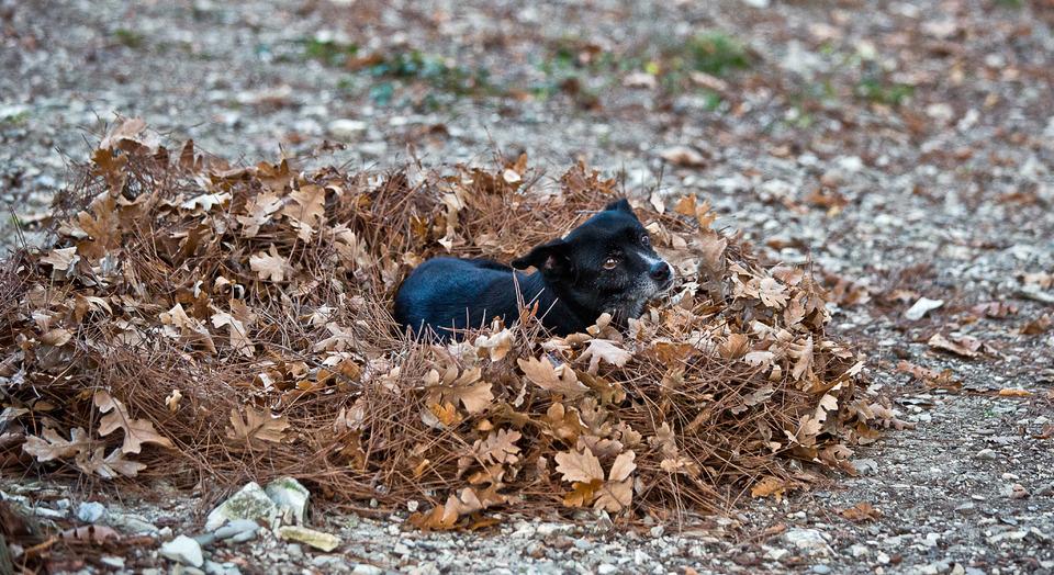 Dog sleeps in fallen leafs