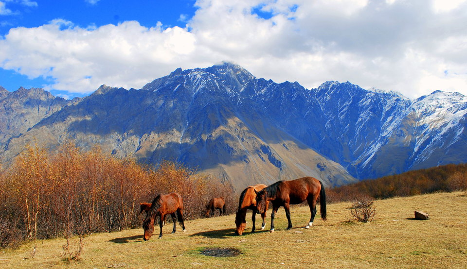 Grazing horses | animals, horses, mountains  , graze, herd, sky, clouds, sunny day, trees, meadow