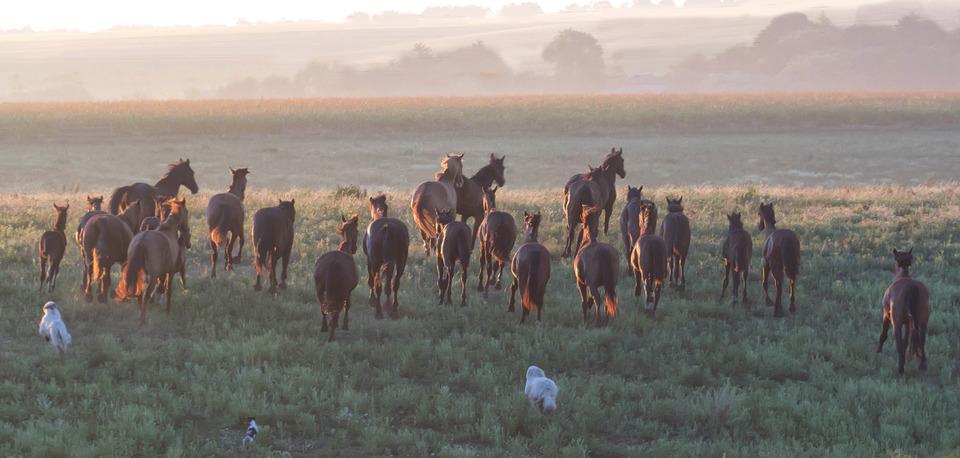 Tribe at dawn