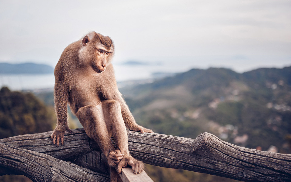 Monley-model sitting on a branch | branch, monkey, model, animal