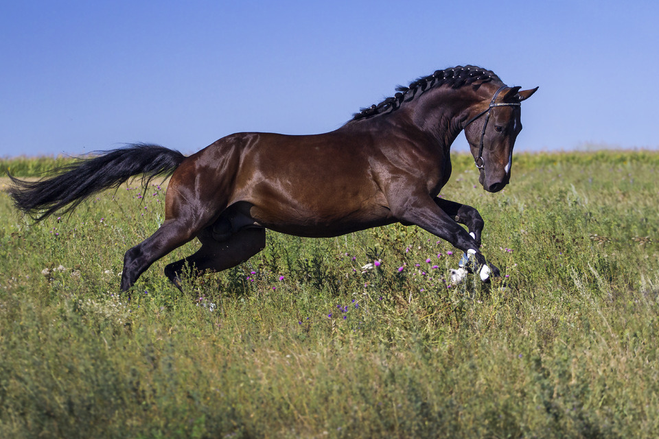 Beautiful horse running through the grass | horse, meadow, grass, sky