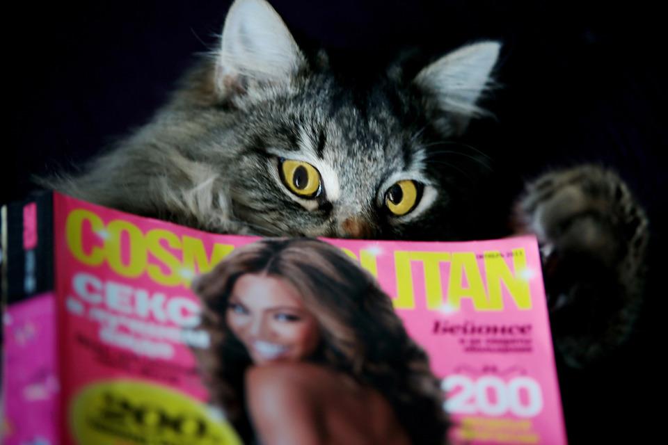 Fluffy cat reads Cosmopolitan