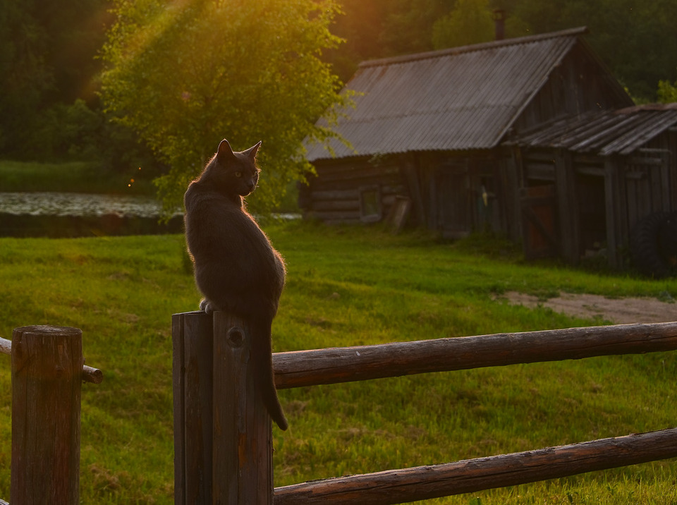 Cat sitting on a fence | fence, cat, village, summer