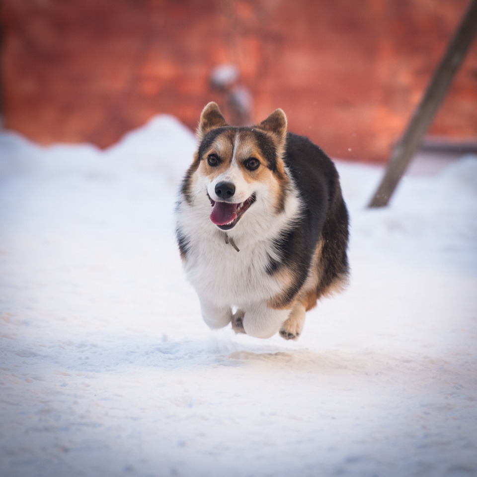 Flying doggie | flight, winter, snow, dog