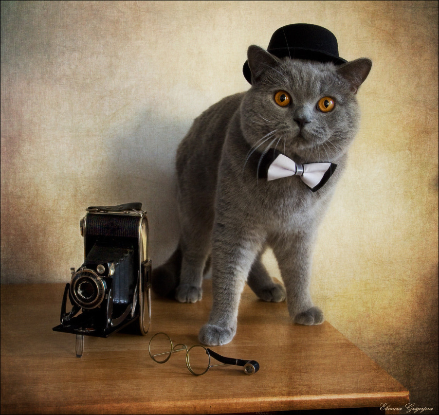 British Shorthair and old camera