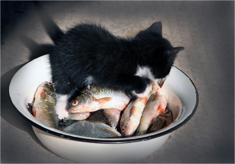 Little cat in the basin with fish