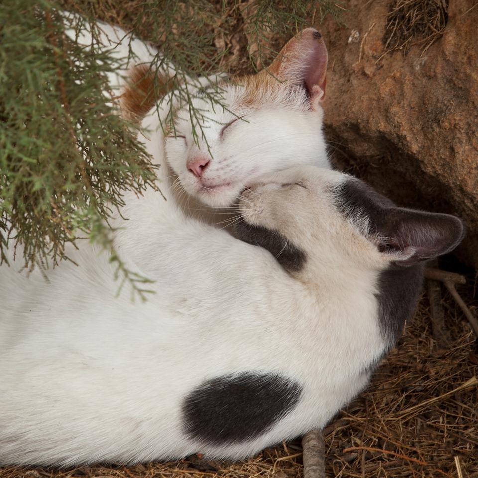 Loving kittens