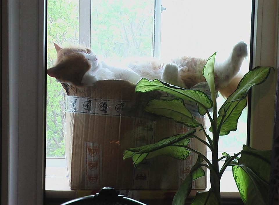 Cute cat sleepping in the box | animal, pet, cat, window, flower, box, sleep, fluffy, windowsill, white-browed