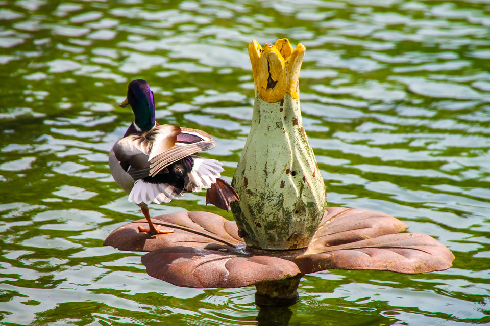 Colorful drake on the artificial lily | animal, duck, artificial lily, drake, ripples, water, paws, sunny, wings, colourful