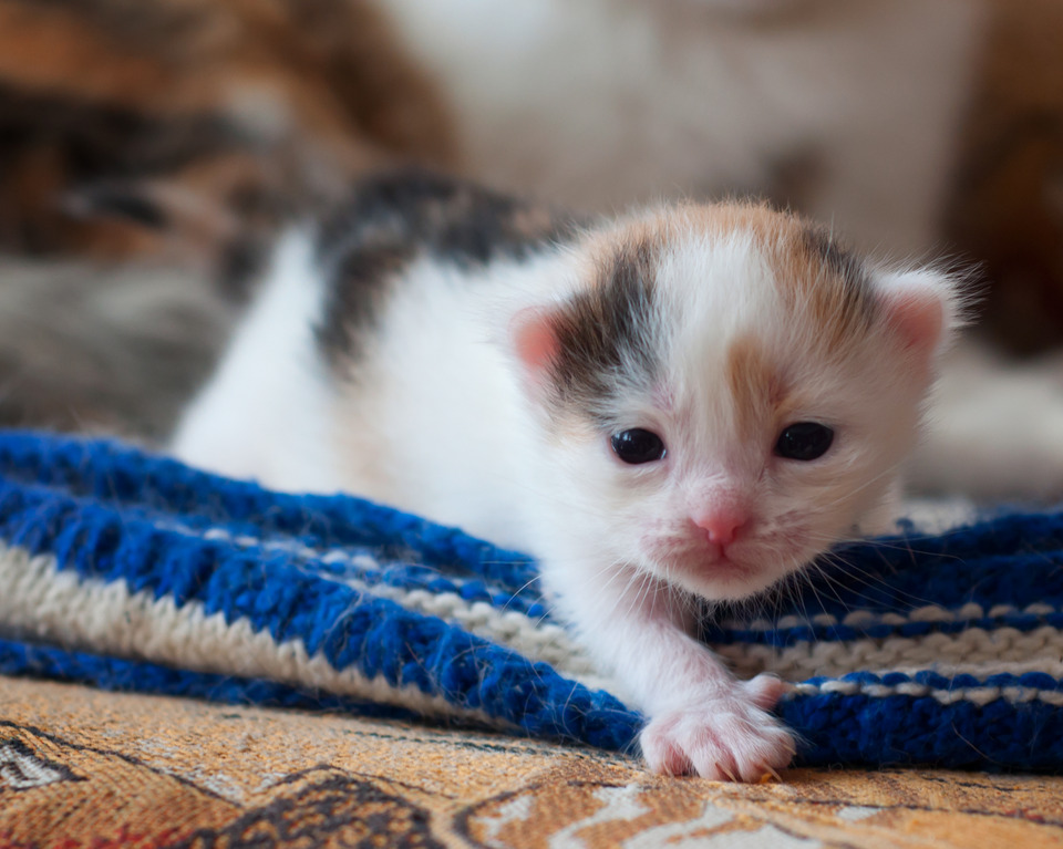 First steps of a little kitten