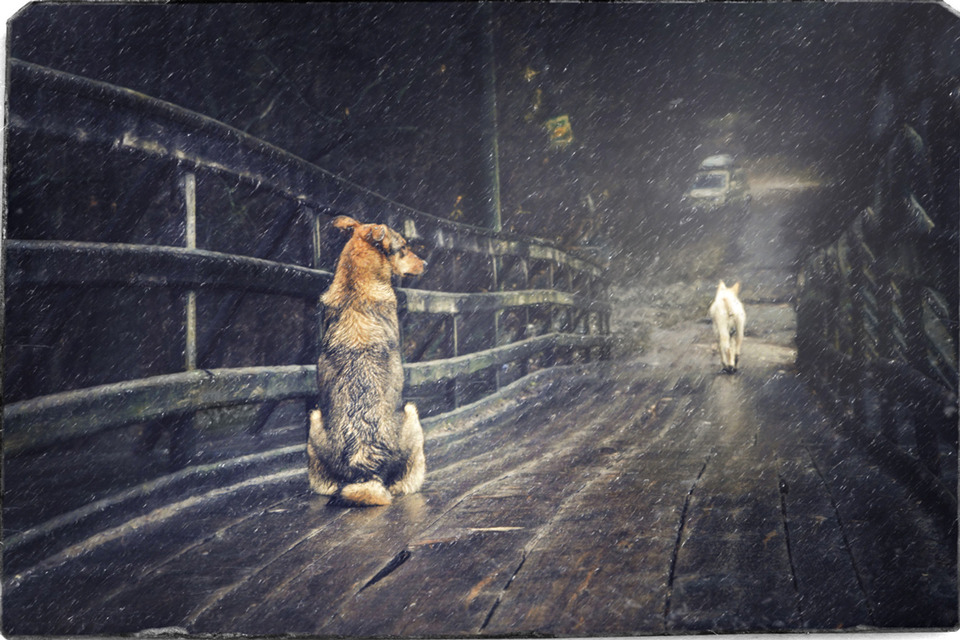 Two dogs, winter parting