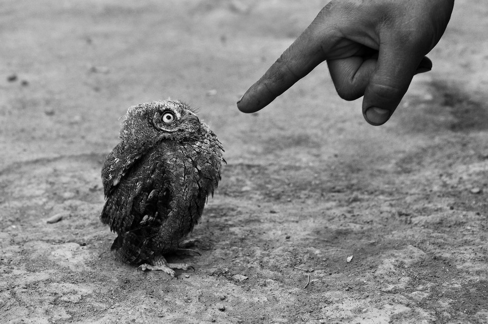 You did it?! | owl, black & white, street, finger