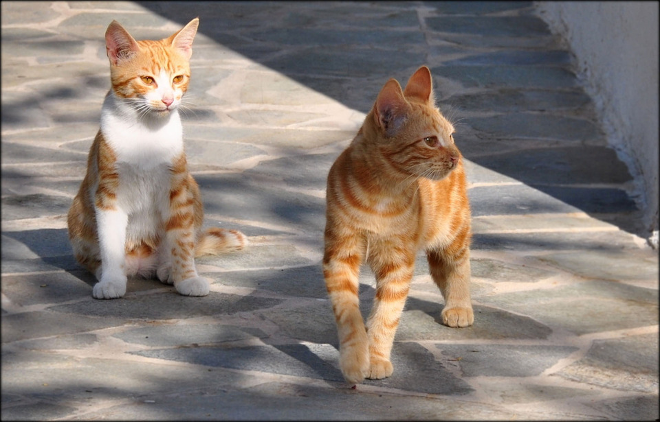 Two cute sunny cats | animal, pet, cats, red, sunny day, street, summer, city, walk, cute