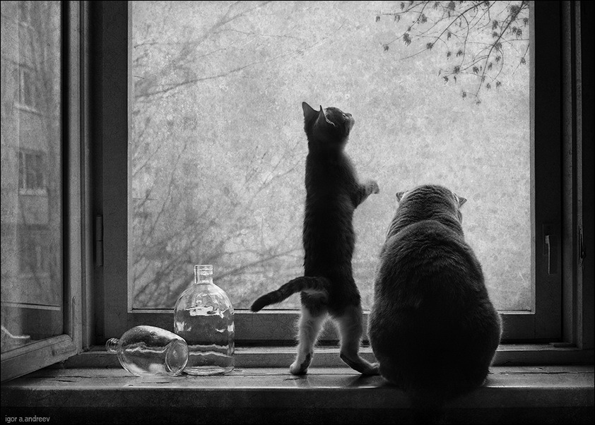 Two friends looking through the glass | black & white, cat, friend, window
