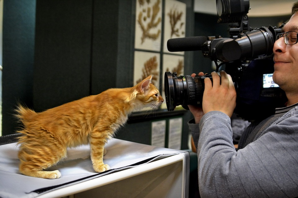 Shooting of the curious red cat
