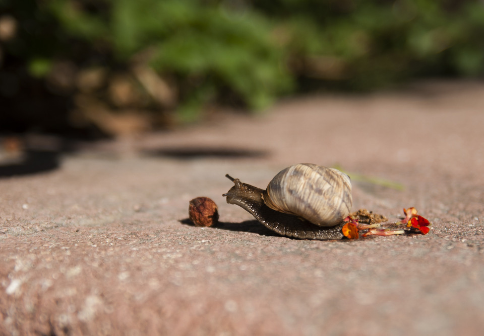 Cute snail | animal, snail, wild, little, nature, crawl, road, sunny day, green, leave