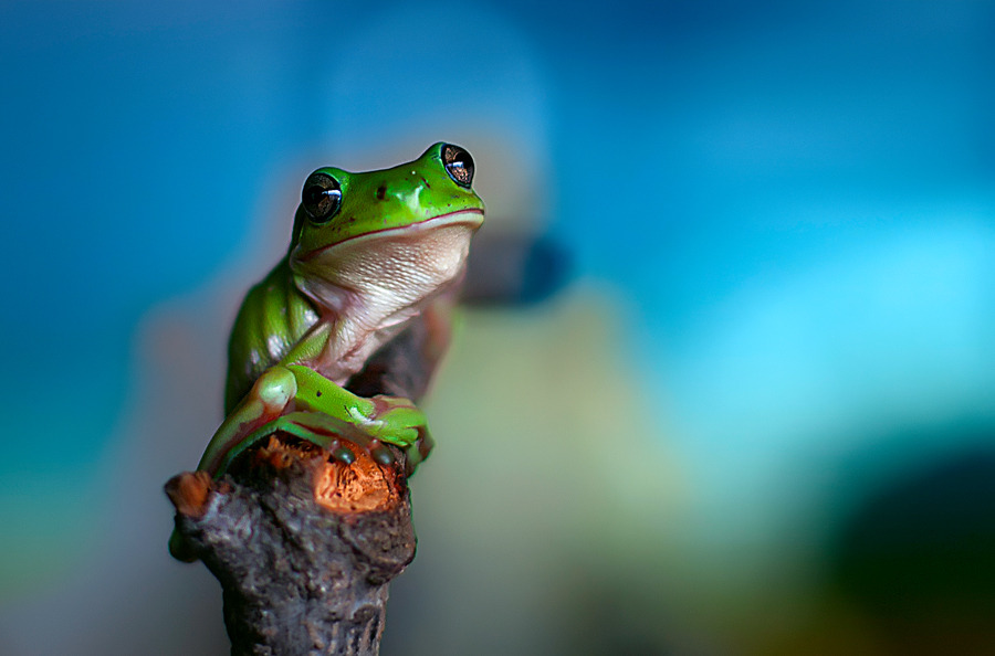 Green frog sitting on a branch