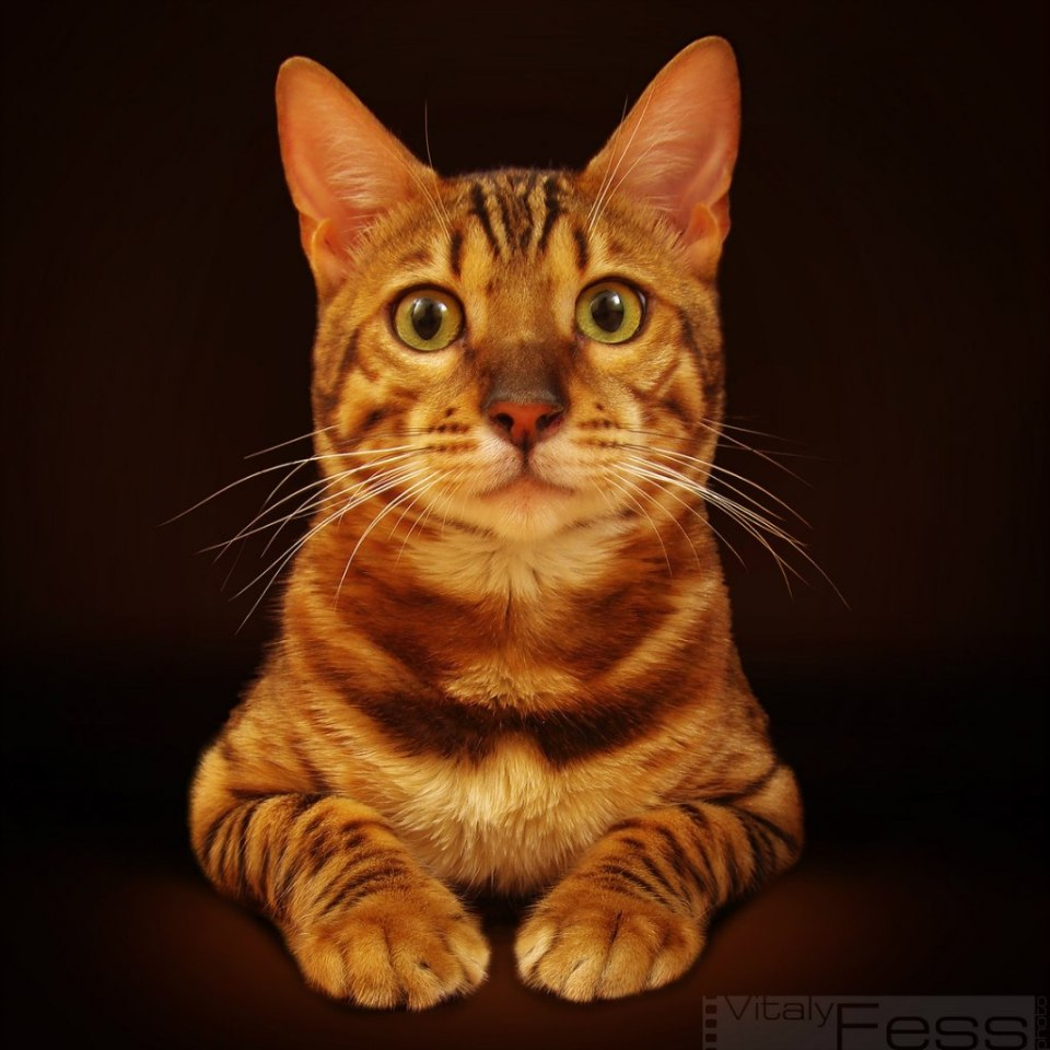 Portrait of a cute striped cat