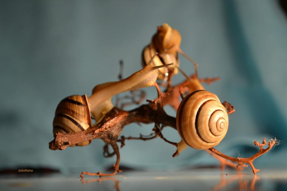 Talking snails
