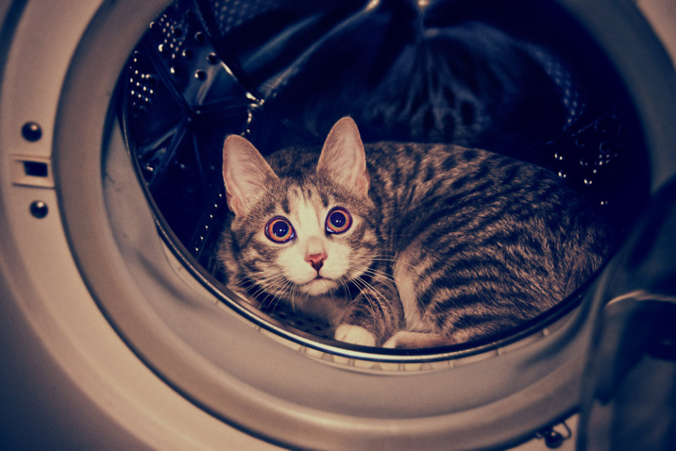 Cute cat in the washing machine