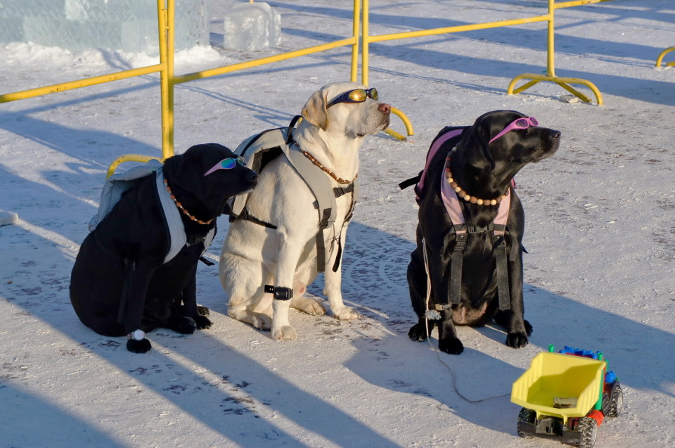 Three dogs in the glasses