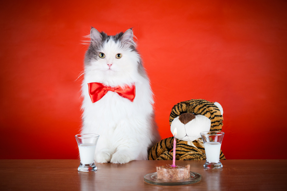 Cat's feast | animal, pet, cat, cute, fluffy, red bow-tie, red background, table, toy, milk