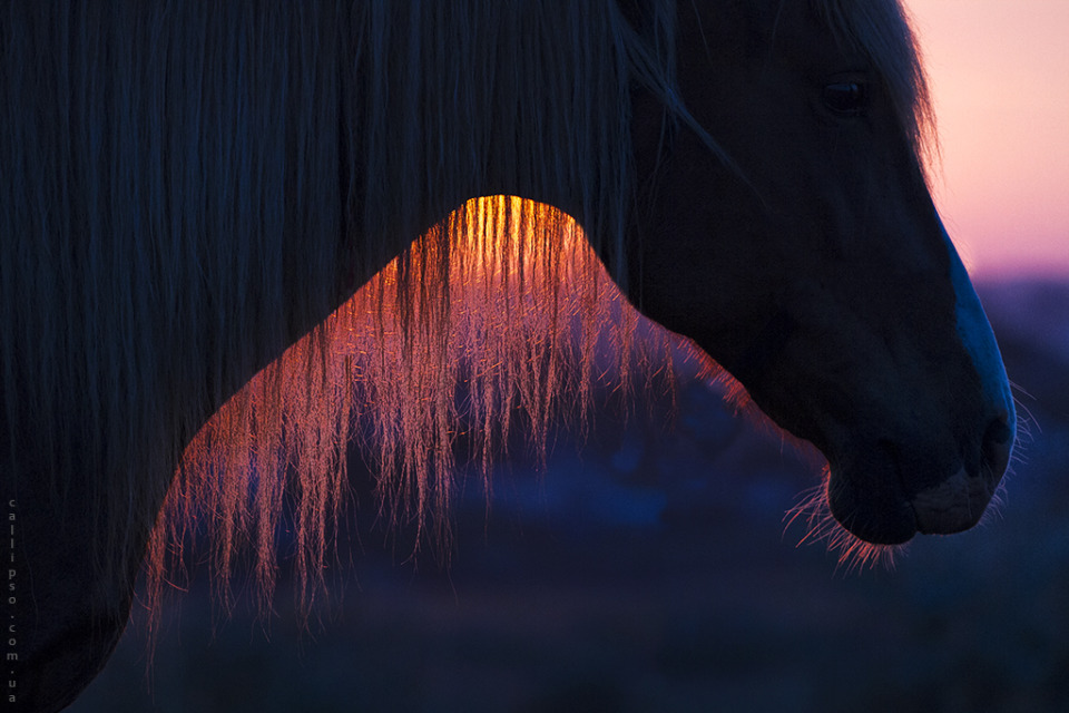 Dawn through mane | animal, horse, morning, dawn, sun, mane, mare, muzzle