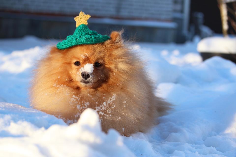 Dog wears hat