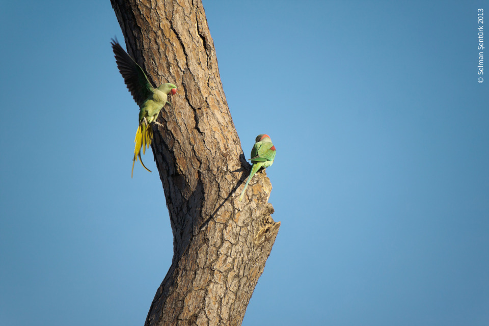 Two parrots | animal, birds, tree, sky, cloudless, bark, pair, parrot, colour, shadow